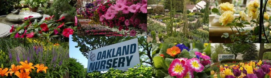 If You Haven T Been To Oakland Nurseries Simply A Nursery