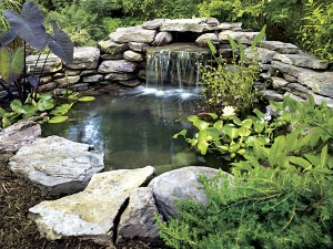 DIY-Backyard-Pond