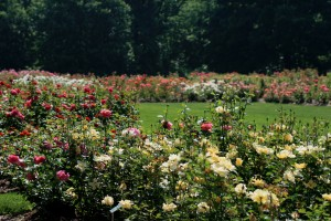 Park of Roses 5 5 29 10