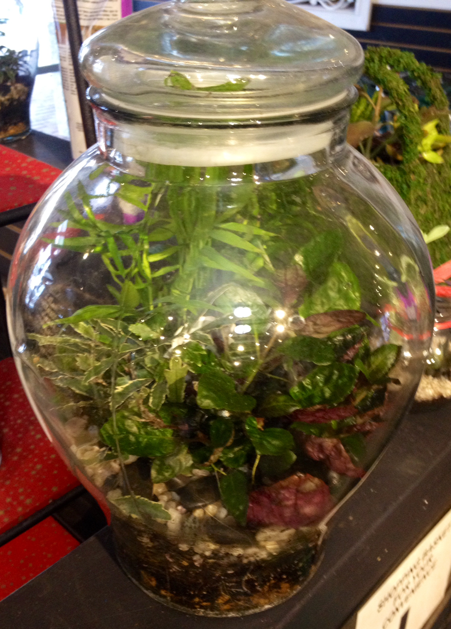 photo 4 - Fairy Garden Terrarium